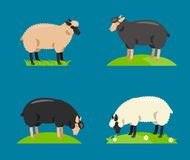 Illustration of a cartoon sheep.Vector Royalty Free Stock Image