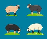 Illustration of a cartoon sheep.Vector Royalty Free Stock Image