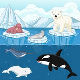 Cartoon wild arctic animal on north pole. Illustration of Cartoon wild arctic animal on north pole Royalty Free Stock Photography