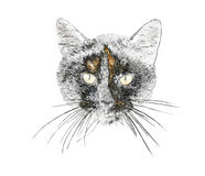 Illustration of a cat`s face Royalty Free Stock Images