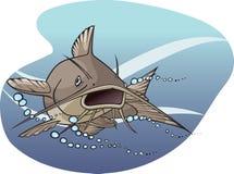 Catfish Stock Images