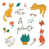 Illustration of cats plants flowers and twigs Royalty Free Stock Photos