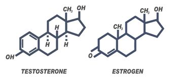 Illustration of chemical formula for male and female hormones Testosterone and Estrogen
