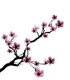 Illustration of cherry blossom Stock Photography