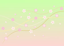 Illustration of Cherry Blossom (Sakura) Stock Images