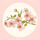 Illustration cherry blossoms Stock Image