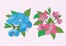 Illustration of cherry flowers vector Royalty Free Stock Images