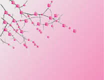 Illustration of a cherry twigs in bloom Royalty Free Stock Image