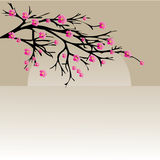 Illustration of a cherry twigs in bloom Stock Photography