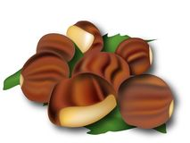 Illustration of chestnuts Stock Photography