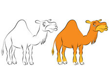 Illustration of the chewing orange camel with one hump Royalty Free Stock Photography