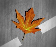 Illustration of a chinar leaf Royalty Free Stock Photos
