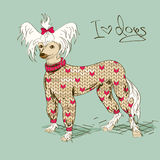 Illustration with Chinese Crested dog Royalty Free Stock Images