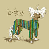 Illustration with Chinese Crested dog. Dressed in knitted clothes Royalty Free Stock Image