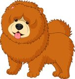 Chow chow dog breed. Illustration of Chow chow dog breed Royalty Free Stock Photos