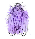 Illustration cicada  with boho pattern and watercolor splashes Royalty Free Stock Photography