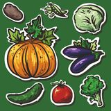 Illustration - collection of beautiful succulent v. Juicy vegetables, white outlines, shadows Stock Photo