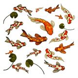 Illustration colorée de vecteur d'ensemble de Koi de carpe de poissons illustration stock