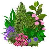 Illustration colorée de vecteur de flowerbad illustration stock