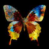 Illustration of a  color butterfly, mixed medium, black background. Stock Image