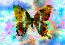 Illustration of a  color butterfly, mixed medium, space backgro Royalty Free Stock Images