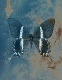 Illustration of a color butterfly, mixed medium, structure  background Stock Images