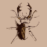 Illustration with colored beetle deer Stock Photos