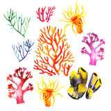 Illustration of the colorful coral reefs Royalty Free Stock Image