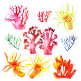 Illustration of the colorful coral reefs. Illustration of the watercolor coral reefs  on a white background Stock Images