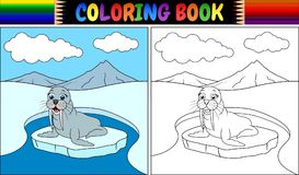 Coloring book with walrus cartoon Royalty Free Stock Images