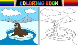 Coloring book with walrus cartoon Stock Images