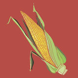 Illustration of corn Royalty Free Stock Photography