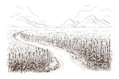 Illustration of cornfield grain stalk sketch. Hand drawn vector illustration sketch cornfield with a road between fields Royalty Free Stock Image