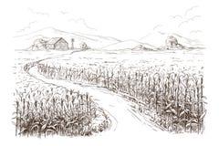 Illustration of cornfield grain stalk sketch. Hand drawn vector illustration sketch cornfield with a road between fields Royalty Free Stock Photo