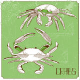 Illustration with  crabs Royalty Free Stock Images