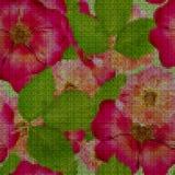 Illustration. Cross-stitch. Briar, wild rose, dog-rose. Seamless. Illustration. Cross-stitch. Briar, wild rose, dog-roseBriar, wild rose, dog-rose. Texture of Royalty Free Stock Photography