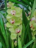 Illustration. Cross-stitch. Orchid flower royalty free illustration