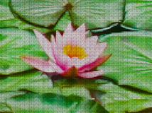 Illustration. Cross-stitch. Water lily, nymphaeum. Stock Photos