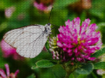 Illustration. Cross stitch. White butterfly. Royalty Free Stock Images