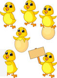 Cute baby chicken cartoon set Royalty Free Stock Photos