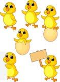 Cute baby chicken cartoon set Royalty Free Stock Photos