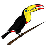 Illustration of a cute colorful toucan sitting on a tree branch Royalty Free Stock Photo