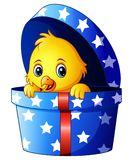 Cute little baby chicken inside a gift box. Illustration of Cute little baby chicken inside a gift box Royalty Free Stock Images