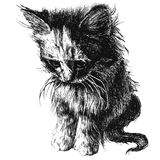 Illustration of a cute little cat Stock Photos