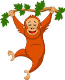Cute orangutan cartoon hanging on a tree branch Stock Photos