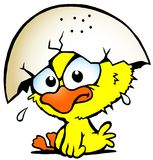 Illustration of an cute unhappy baby chicken. Hand-drawn Vector illustration of an cute unhappy baby chicken Stock Images