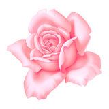 Illustration décorative de vintage de fleur de rose de Rose d'isolement sur le fond blanc illustration libre de droits