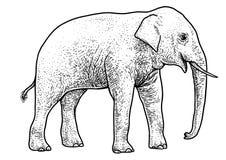 Illustration d'éléphant asiatique, dessin, gravure, encre, schéma, vecteur illustration libre de droits