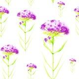 Illustration d'aquarelle avec de belles fleurs pourpres abstraites D'isolement sur le fond blanc Configuration sans joint illustration de vecteur