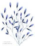 Illustration d'aquarelle avec floral Le freash de peinture fleurit sur la boutique de fleurs blanche de carte cadeaux de fond photos stock